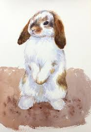 step by step holland lop bunny rabbit