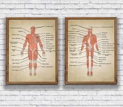 Amazon Com Vintage Human Anatomy Muscles System Body Map