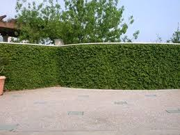 2 Answers  What Kind Of Creeper Plants Available At Indian Market Wall Climbing Plants India