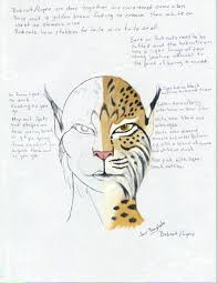 Diagram bobcat the animal diagram diagram of florida bobcat diagram of bobcats