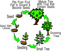 Life cycle of a flowering plant | Learning science in English ...