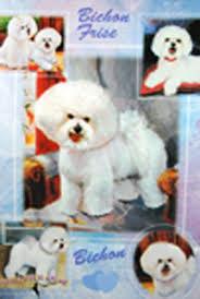 bichon frise dog gift present wrap 181027073621