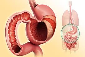 nutrient absorption in the digestive system