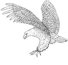 Small Picture Coloring Pages Eagles North American Bald Eagle Pagejpg Coloring