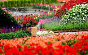 flower garden wallpaper hd collection of beautiful gardens flower garden wallpapers 52 desktop backgrounds