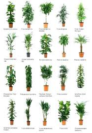 office plants no light. Office Plants Low Light For Desk Common No Indoor That Require Little F