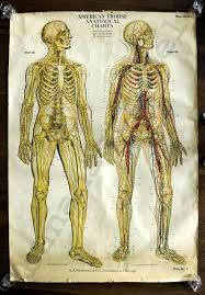 Office Decor I Want A Large Sized Anatomical Chart At