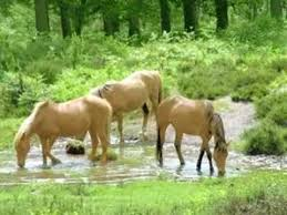 best all the pretty horses ideas pretty horses  all the pretty horses harp lullaby