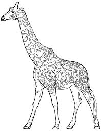 Giraffe Coloring Pages Realistic For Adults Get Coloring Page