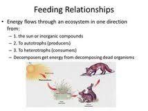essay ecosystem custom research proposal writers website biology ecosystem an ecosystem essay 863 words majortests