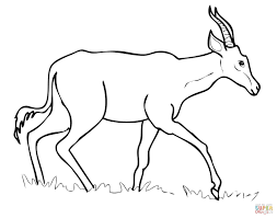 Small Picture Hartebeest coloring page Free Printable Coloring Pages