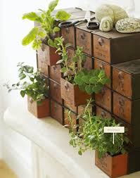 Vintage Drawer Herb Plants