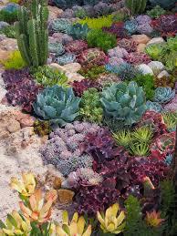 best 25 outdoor cactus garden ideas on