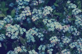 Blue Aesthetic Flower Computer ...