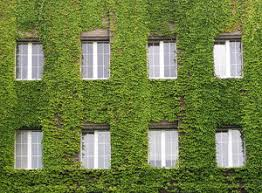 Vine house, abstract, background, building, green, grow, growing, house,  ivy, leaf, leaves, plant, plants, red, texture, wall, wallpaper, windows