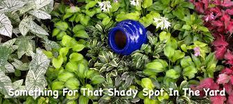 shade gardening in florida