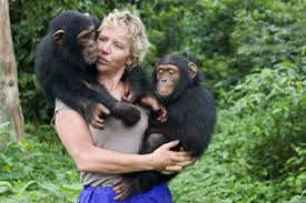 careers animals zoologist become one the gorillas primatologist job outlook