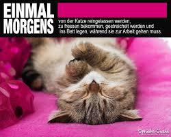 Lustige Sprüche über Katzen Arbeit Sprüche Suche