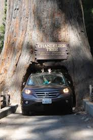 chandelier drive through tree going through the tree