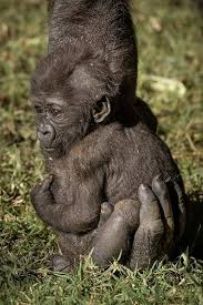 Image result for cute baby animals with parents