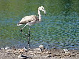 Flamingo Elva Bird - Gratis foto på Pixabay