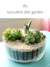 dish gardens. DIY Succulent Dish Garden | Click Through For The Tutorial And Tips Keeping Succulents Happy Gardens
