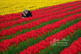 photographing tulips on calhoun road skagit valley