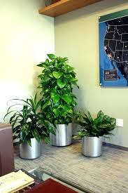 decorative plants for office. Plants For The Office Decorative Crossword U