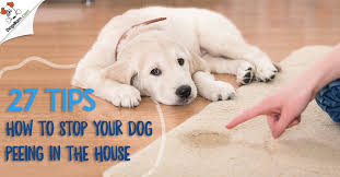 main image on how to stop your dog in the house