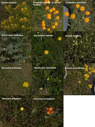Quantifying Plant Colour And Colour Difference As Perceived