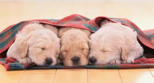 cute baby puppies sleeping. Delighful Puppies Cutest Sleeping Puppy Photos And Cute Baby Puppies O