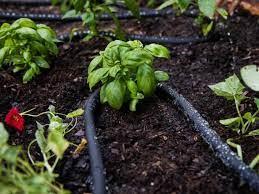 water your garden watering plants