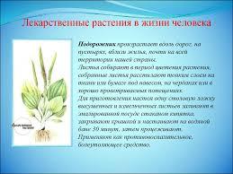 Лекарственные растения класс презентация онлайн Лекарственные растения в жизни человека Лекарственные растения в жизни человека