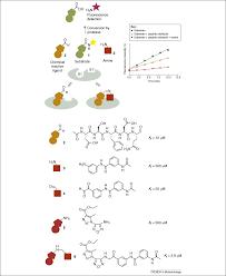 Fragment Based Drug Design Ppt Dynamic Template Assisted Strategies In Fragment Based Drug