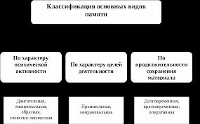 Взаимосвязь и взаимодействие видов памяти человека Реферат  Классификация основных видов памяти