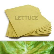 Biodegradable Paper With Flower Seeds 8 5 X 11 Green Lettuce Seed Paper 8 5 X 11 Veggie Catalog