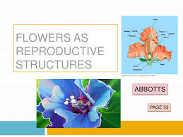 Ppt Flowers Ppt Flowers As Reproductive Structures Powerpoint Presentation