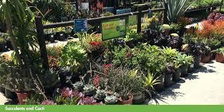 costco garden center garden centre locations costco garden center plants