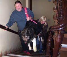 Fast nichts ist schlimmer, als wenn sich unsere vierbeinigen freunde verletzen. 19 Hunde Tragehilfe Ideen Tragehilfe Hunde Tragen