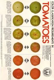 Tomato Color Chart Tomato Growth Ripening And Postharvest Physiology