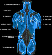 Muscle Charts Health Fitness __cat__ Fitness Motivation