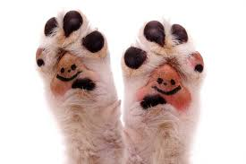 dog s paws