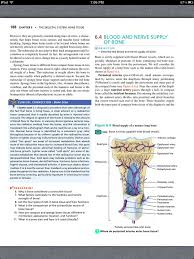 best chapter the skeletal system bone tissue images on  principles of anatomy and physiology chapter 6 the skeletal system bone tissue