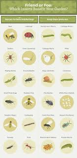how to get rid of garden pests for good fwx insects that benefit the garden
