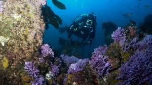 Barrier Reef Coat Rack Discovering LifeSaving Medicines in Coral Reefs KCET 69