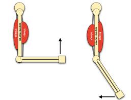 Samentrekkende spieren