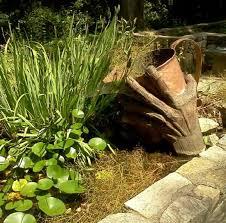 photo of botanical gardens at asheville asheville nc united states location