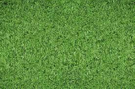 grass soccer field. Green Grass Background Of Soccer Field Stock Photo - 5540073