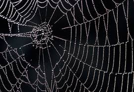 Spider Web Pattern Mesmerizing How Spider Webs Achieve Their Strength MIT News