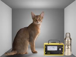 Schrödingers Katze Wikipedia